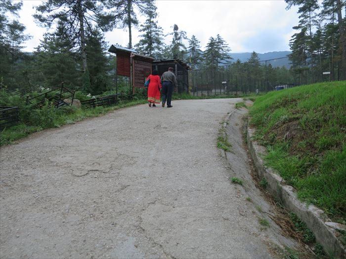ターキン保護区の坂道