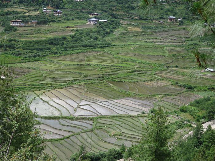 ブータンの棚田