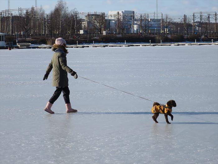 凍った海の上で犬の散歩