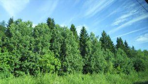 夏のフィンランドの森