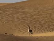 ジャイサルメール 砂漠
