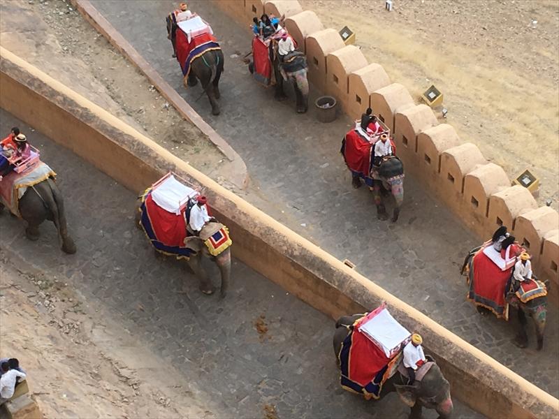 アンベール城観光の名物「象のタクシー」