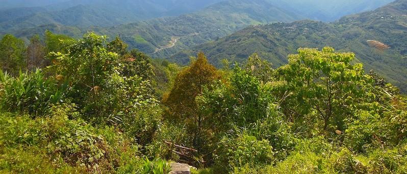 キナバル国立公園のジャングル