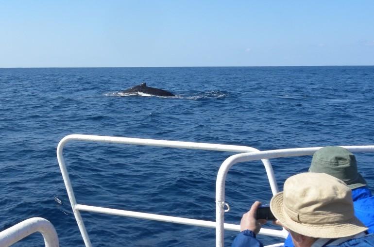船からクジラウォッチング