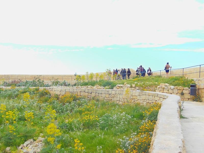たくさんの花が見られるマルタ島