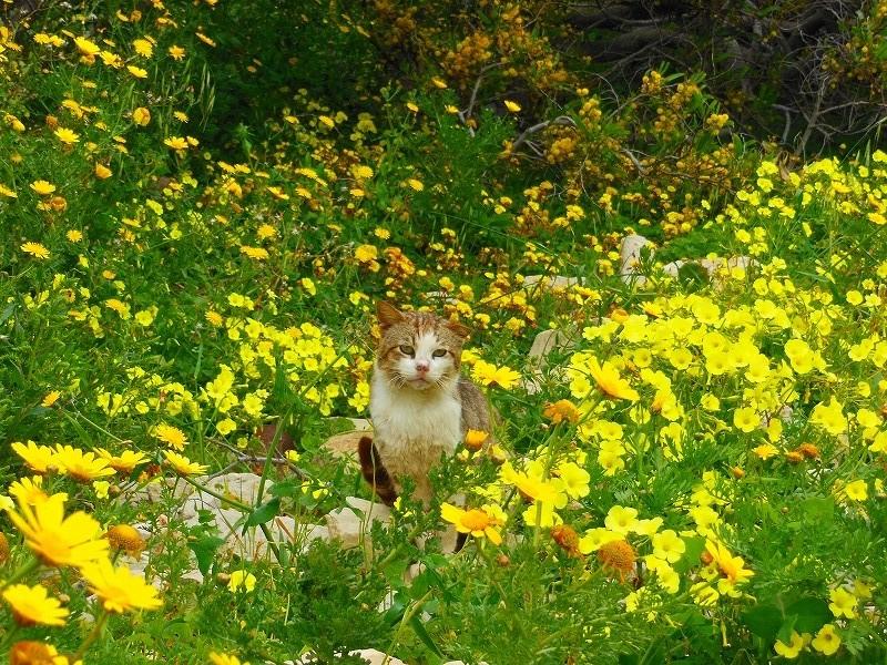 マルタ島と花と猫