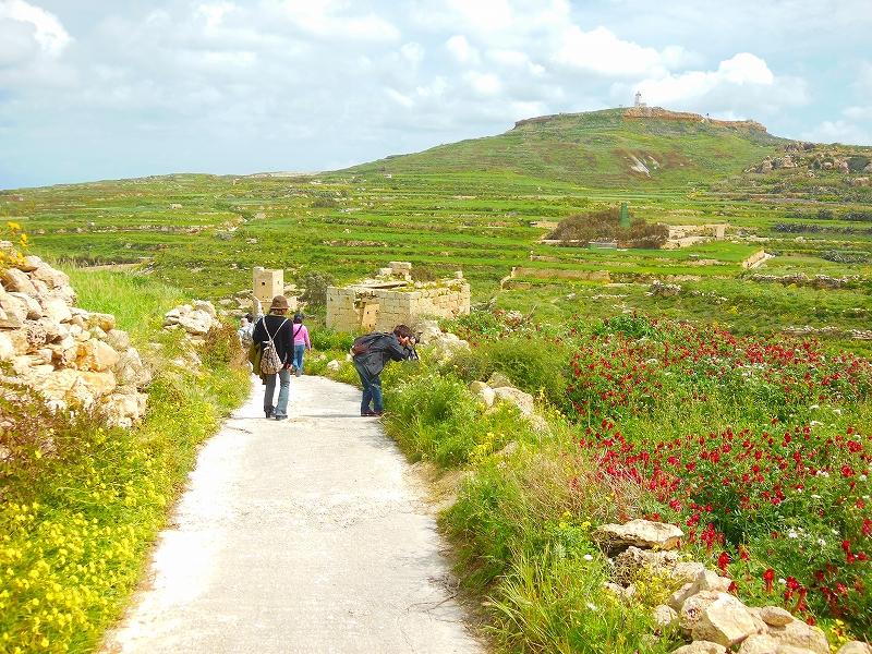ぶらぶらゴゾ島の田舎道を歩く
