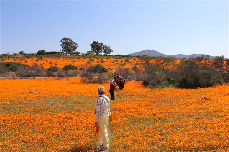 オレンジ色の絨毯を歩こう!