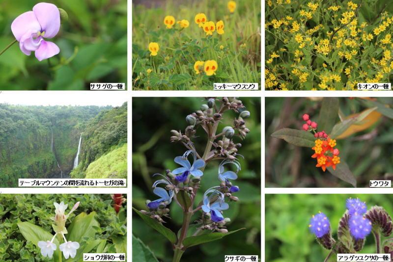 カース台地の花々