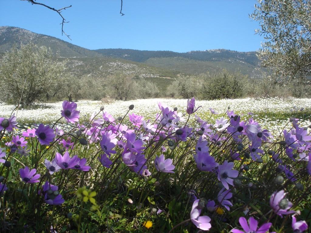 紫アネモネと白いカモミール