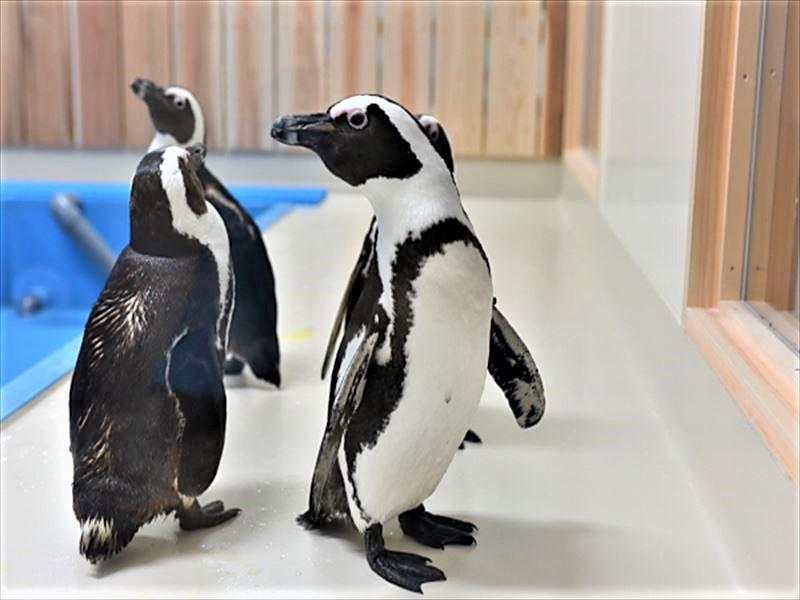 和歌山 道の駅すさみ 水族館のペンギン