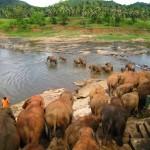 象の孤児院 水浴び