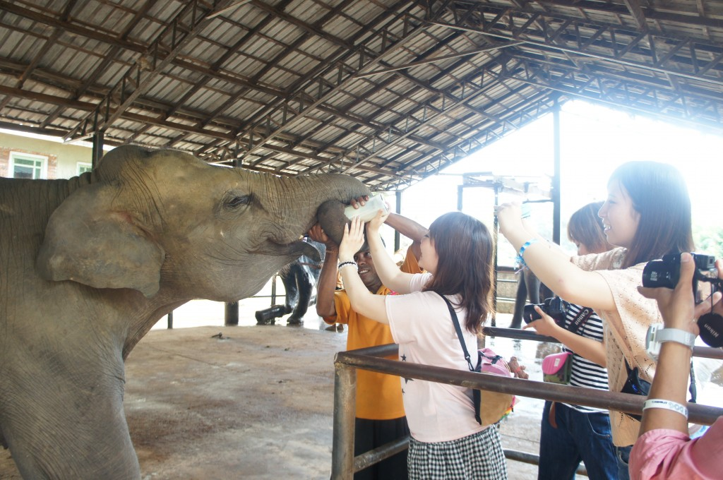 象にミルクをあげよう!