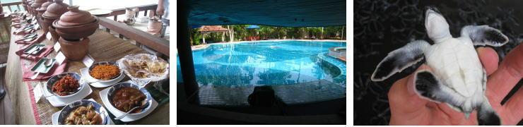 ジェットウイングライトハウスのカレービュッフェ、プール、ウミガメ