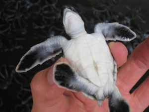 海亀センターの海亀