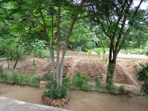 アーユピヤサの農園