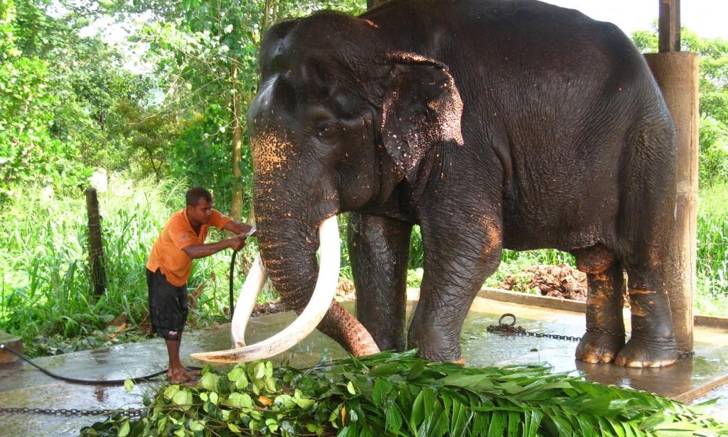 象の孤児院にいる 超巨大な象