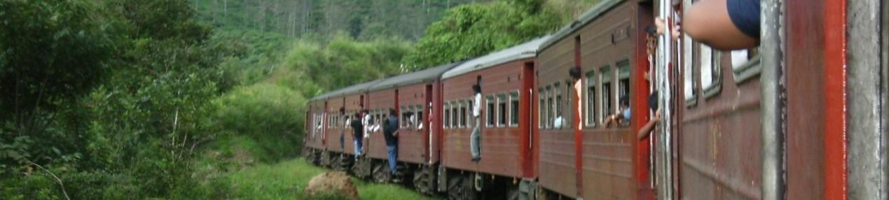 緑の中を走る列車