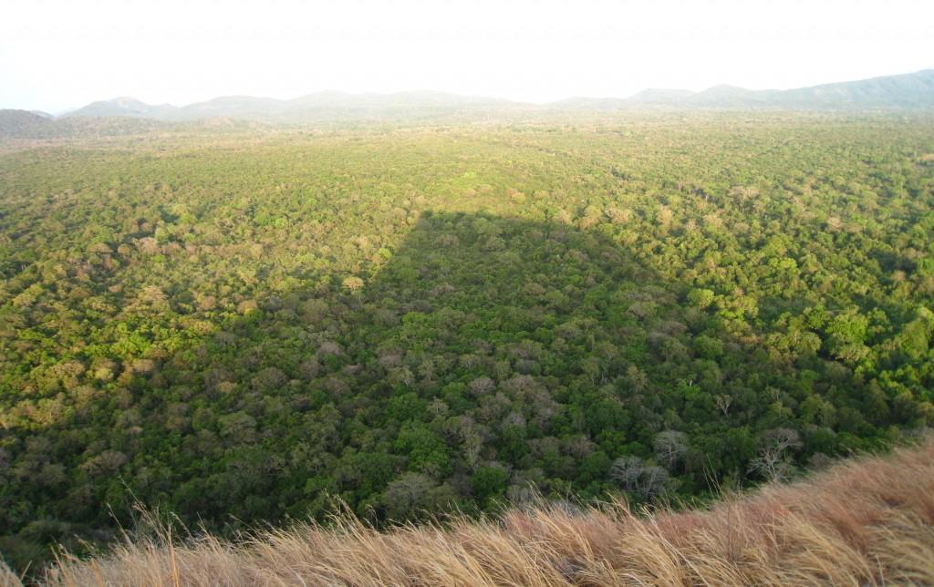 ジャングルに伸びるシギリヤロックの影