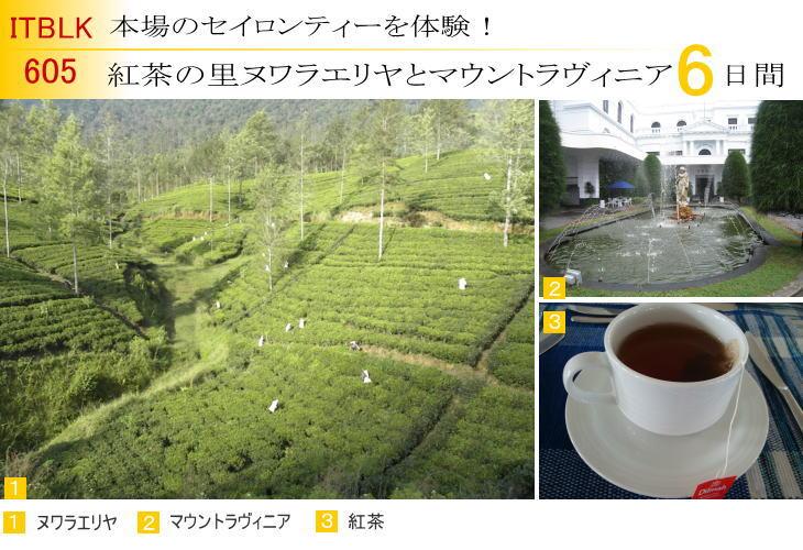 605 紅茶の里ヌワラエリヤとマウントラヴィニア