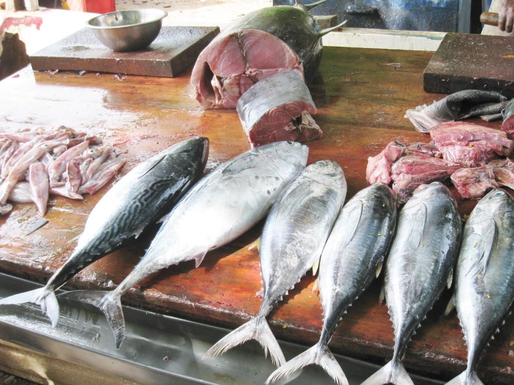 魚市場で売られるマグロ