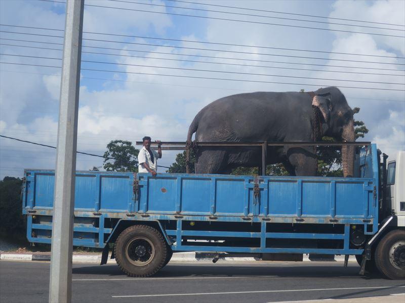 トラックの上の人と象
