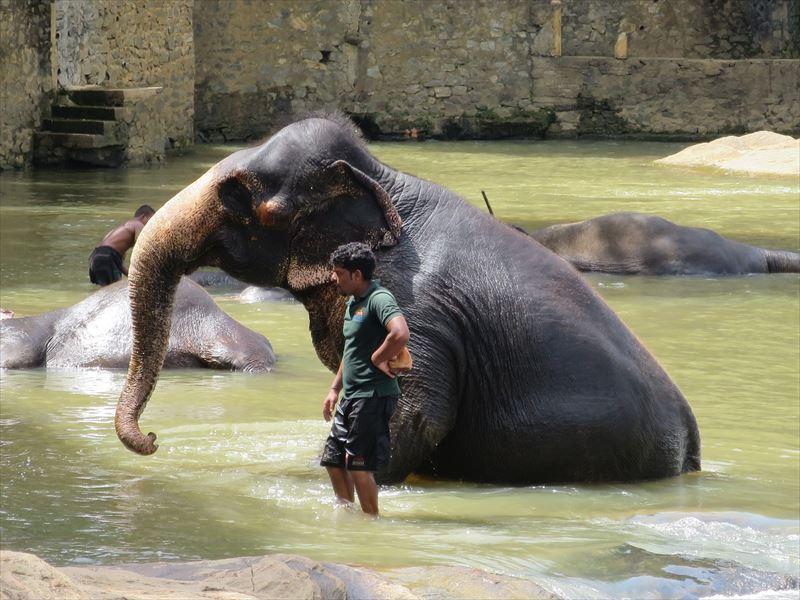 水浴び中の象