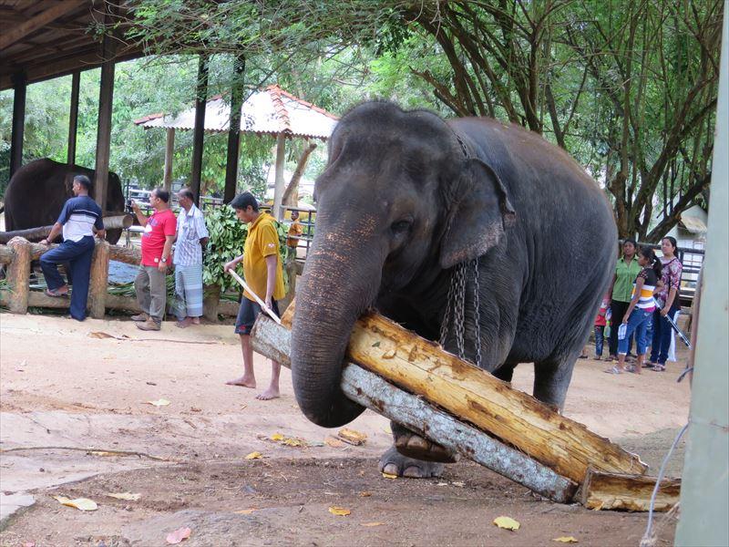 3本の丸太を運ぶ象