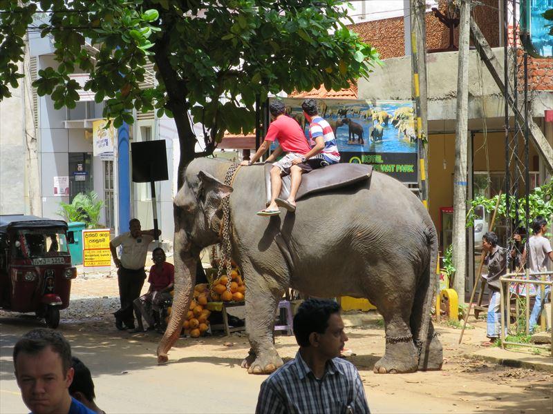 象に乗る観光客