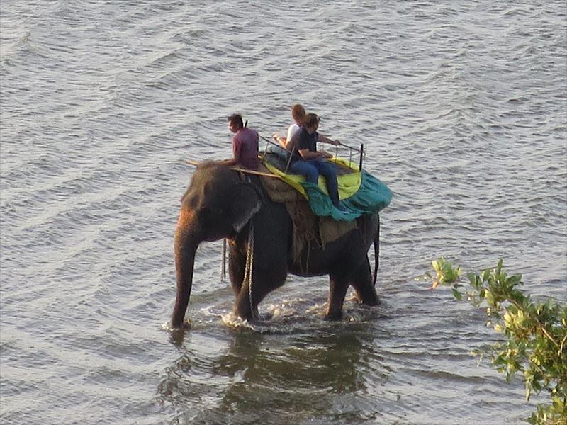 カンダラマ湖を歩く象