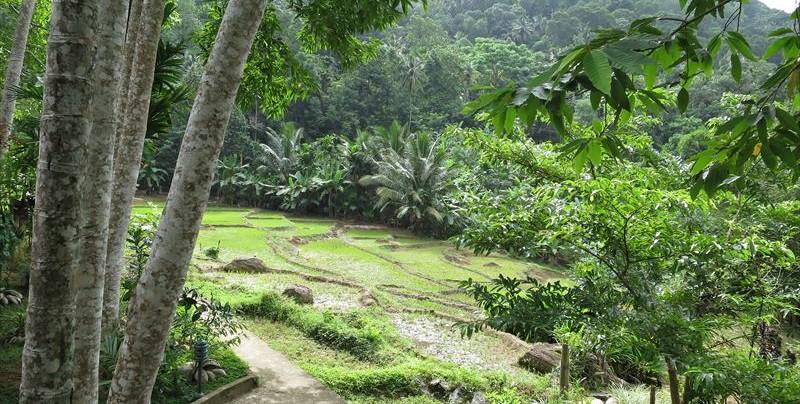 アーユピヤサの自家農園