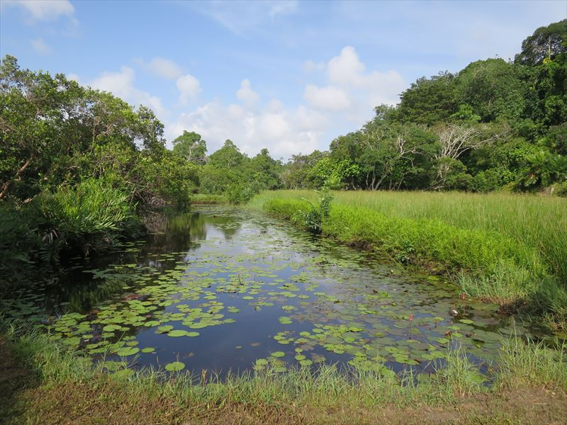 ルヌガンガの水辺