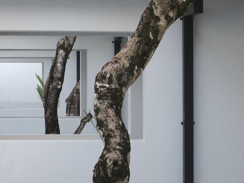 アバニ・ベントータの木々