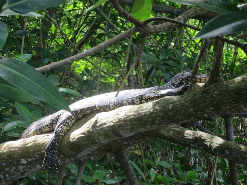 木の上で休む大トカゲ