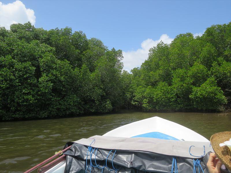 マングローブの林へ