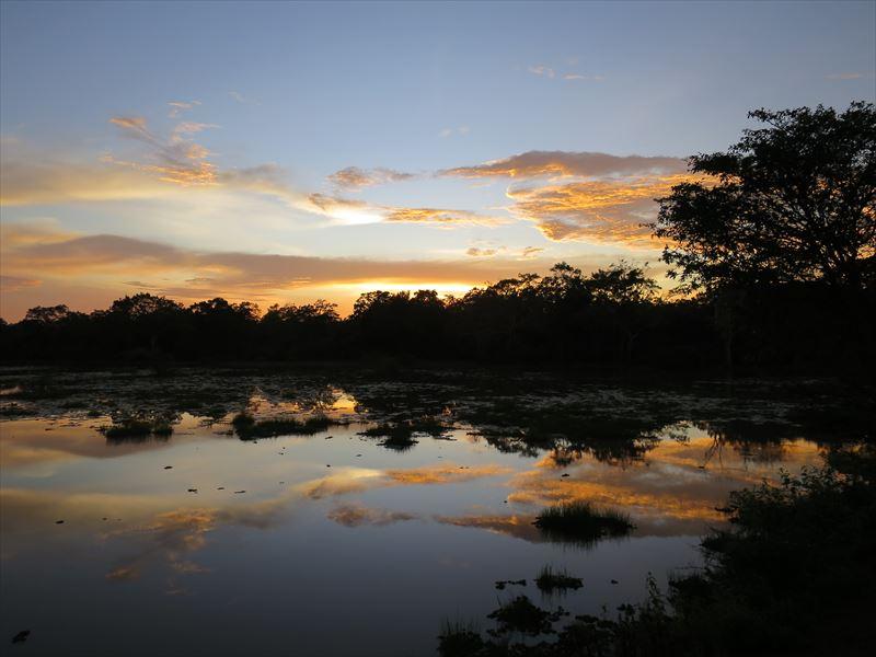 ウィルパットゥ国立公園の風景
